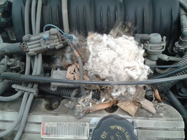Mouse nest in engine